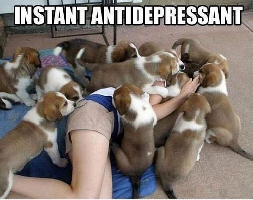 Best-Antidepressant-Ever