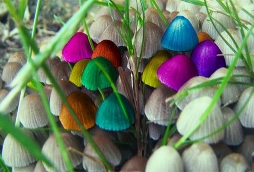 псилоцибидный гриб
